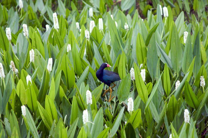 Bird in green