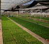 Chennong_greenhouse1