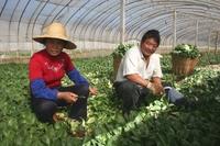Farmer_wang_1