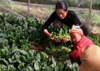 Spinach_farmers_2